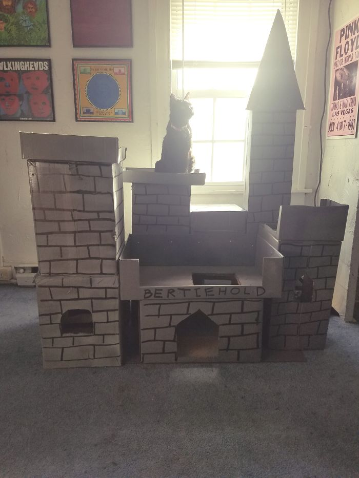My Boyfriend Built A Castle For My Cat On His Day Off