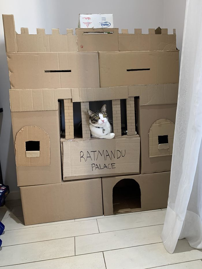 Clovis, Just Having A Saturday Hanging Out His Castle, As Cats Do