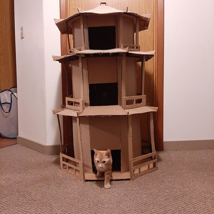 Made A Cardboard Cat Pagoda For Calcifer. It Was On Day 3 Of Making This That I Realized I Am Officially A Crazy Cat Lady
