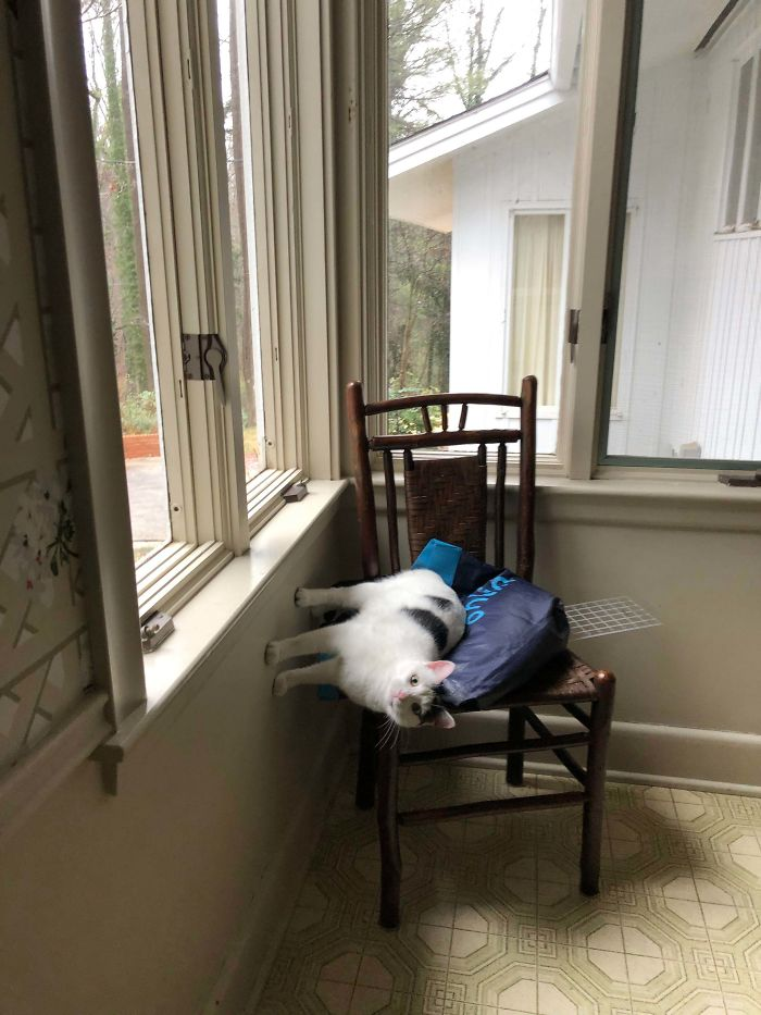My Cat Having A Blast On His Favorite Chair
