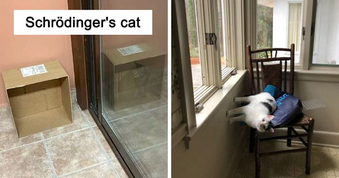 46 Pics That Prove The Laws Of Physics Don't Apply To Cats