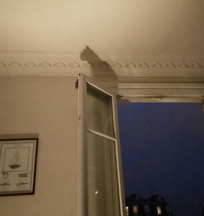 This Shadow Of The Window Frame Looks Like A Cat Is Perched Up There.