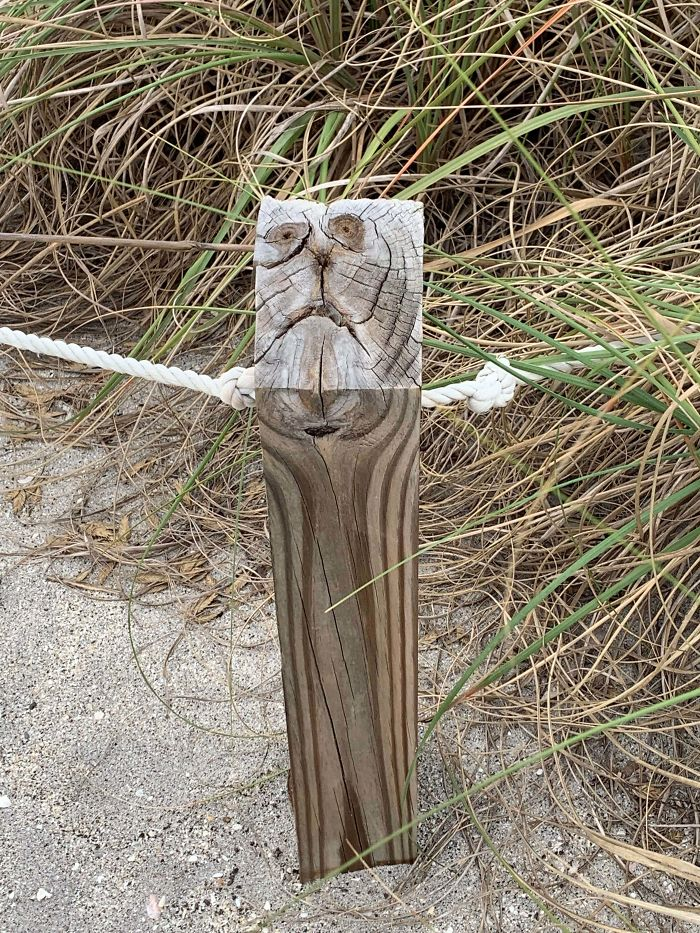 This Wood Post Looks Like An Anxious Cat.