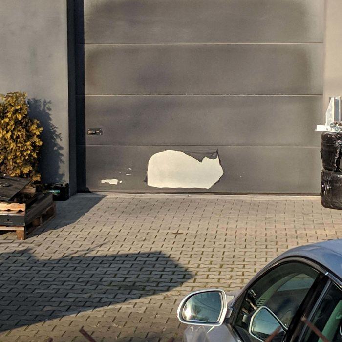 This Peeled Off Paint Area Looks Like Sitting Cat