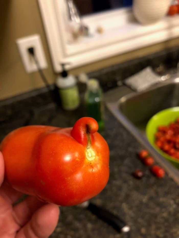 This Tomato I Grew Looks Like A Cats Butthole.