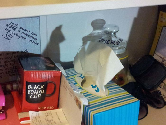 The Shadow Of This Box Of Tissues Looks Like A Cat