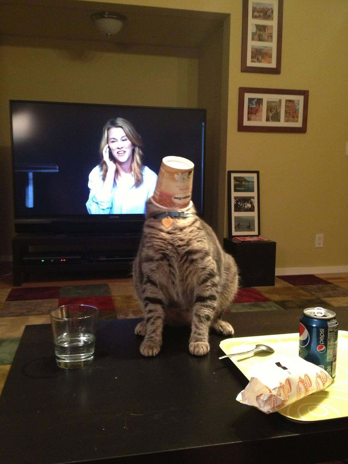 My Cat Got His Head Stuck In The Ice Cream Container. Tried To Back Up. Found That There Was Less Table Than He Thought.
