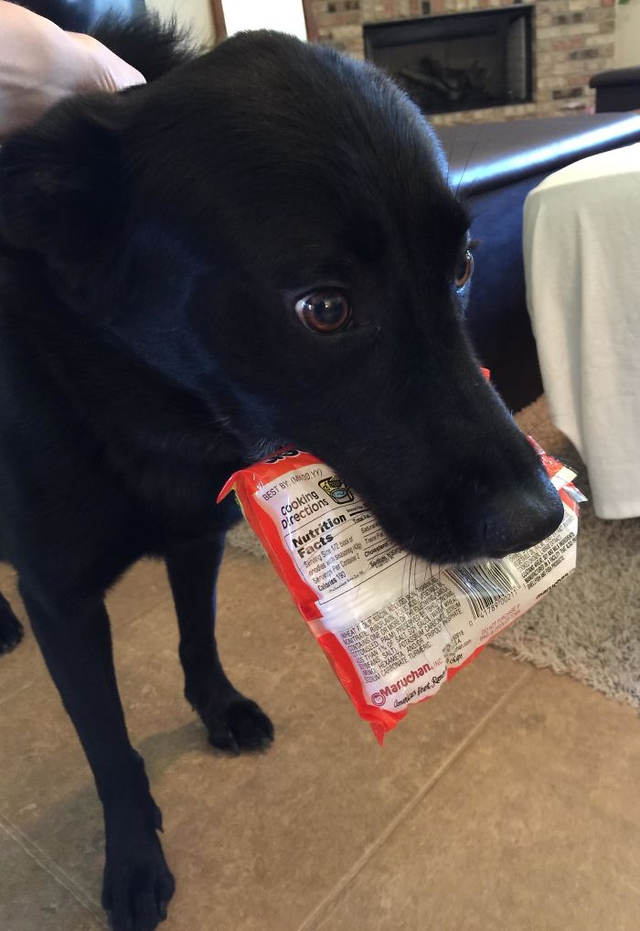 Busted. With The Ramen She Stole From The Pantry