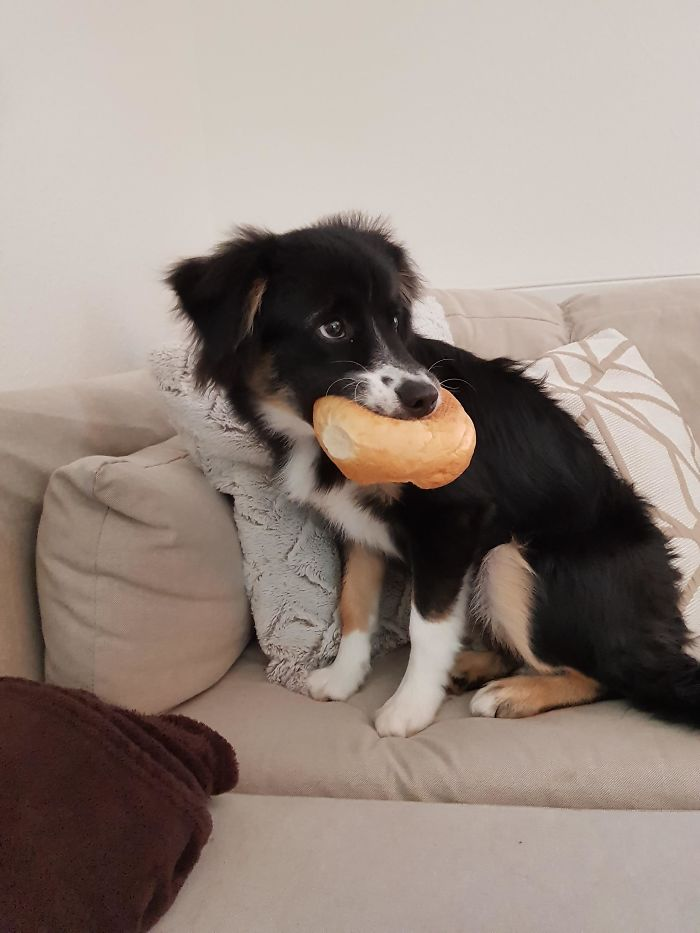 Rare Pic Of The Infamous Bread Thief