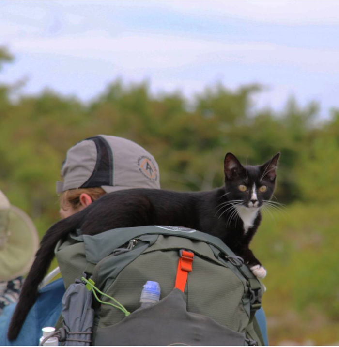 "The Cat I Adopted While Thru Hiking The Appalachian Trail In 2017, ""Odie"". He Rode On My Pack Like This All Day And Napped, Or When He Wanted Down To Hike Or Use The Bathroom He'd Get Up And Meow In My Ear"
