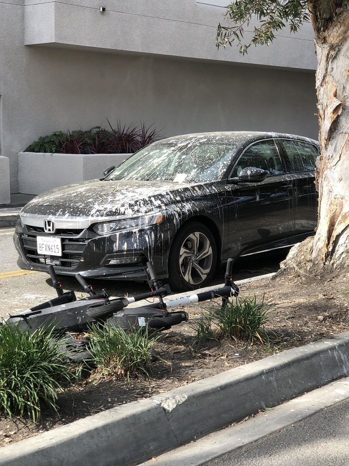 What Could Go Wrong If You Park A Car For Days Illegally Under A Tree Full Of Egrets And Herons