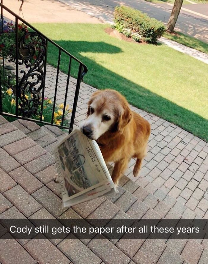Cody Is The Bestest Old Boy