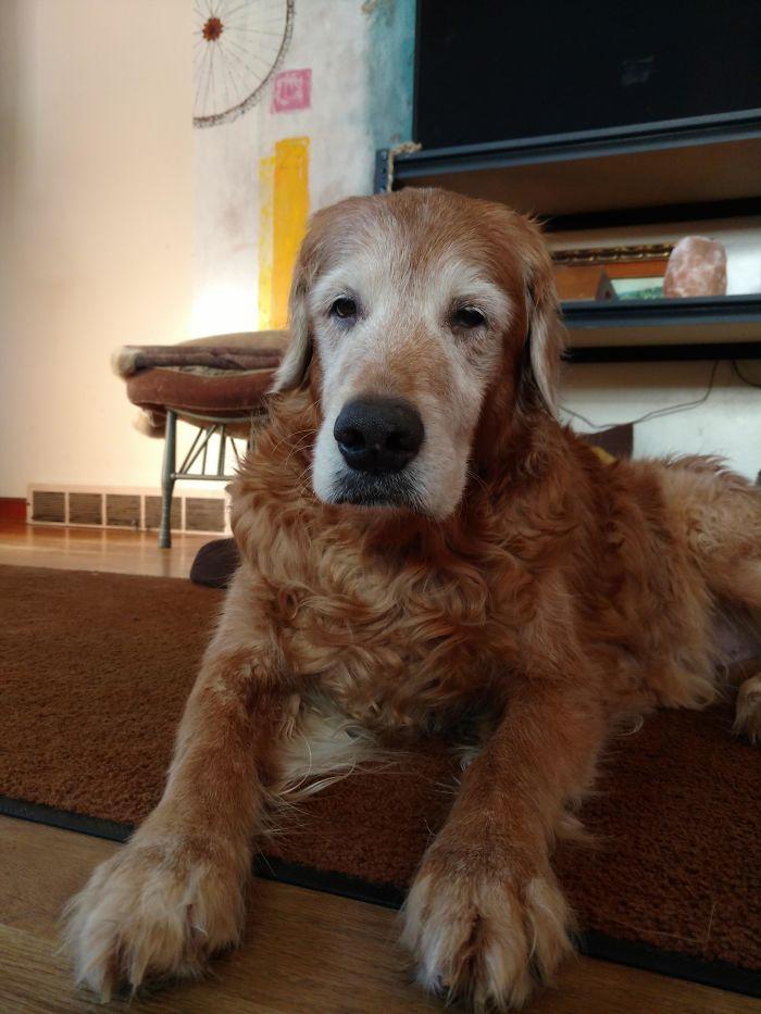 Senior Dogs Deserve Extra Pampering
