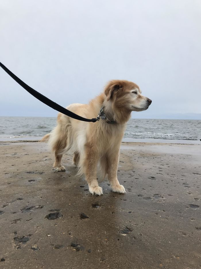Celebrating Molly's 16th Birthday With A Walk To The Pier