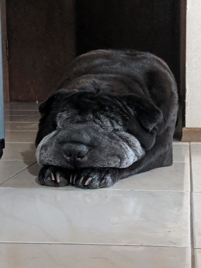 Diesel (9) Is Turning 10 This Month, And He's Melting From All The Excitement