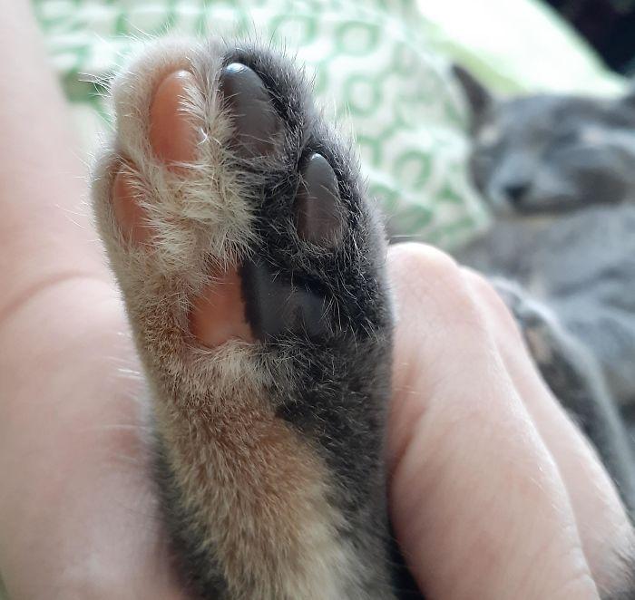 El color de la pata de mi gatito está dividido por la mitad