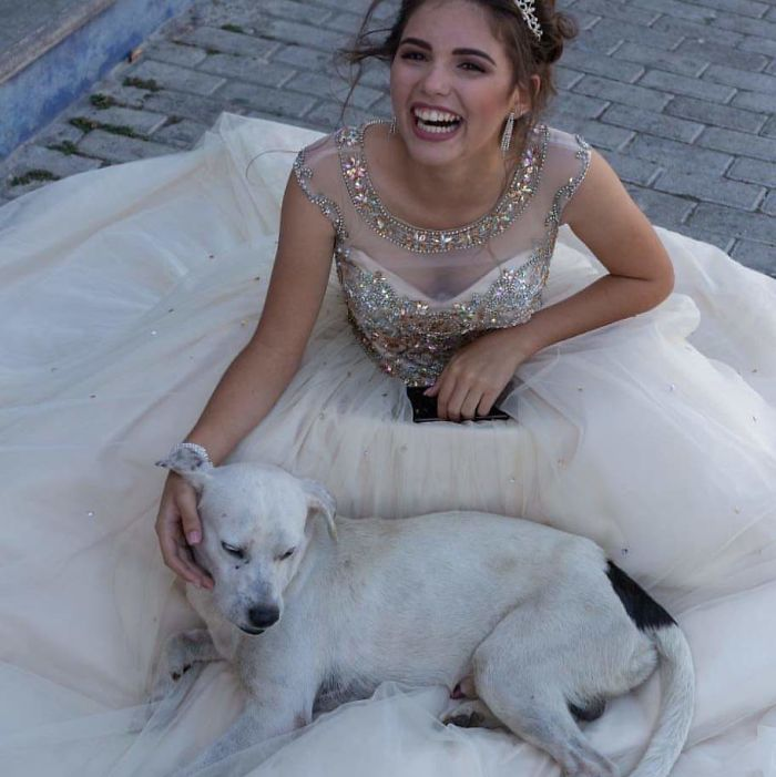 In Mexico, This Girl Who Was Celebrating Her 15 Years Was Posing On The Floor When A Stray Dog ​​approached And Snuggled Over Her. Instead Of Getting Angry, She Asked To Take Pictures Together