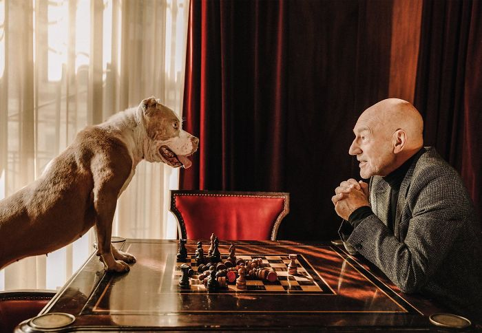 Sir Patrick Stewart Playing A Very Serious Game Of Chess With His Foster Pup