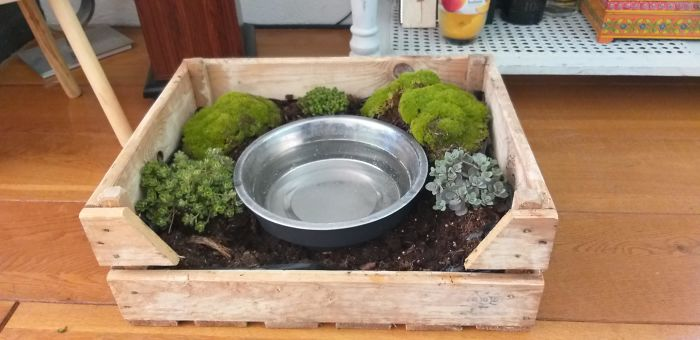 My Dog Rolo Has Always Been A Messy Drinker, My Girlfriend Turned His Water Bowl Into A Moss Garden To Keep The Place Tidy