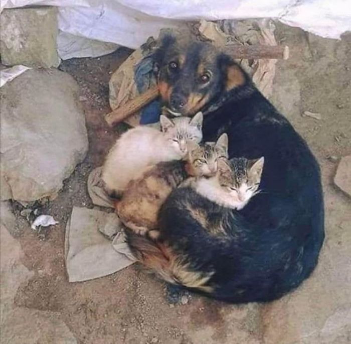 Stray Dog Looking After Stray Kittens