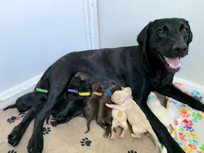 My Foster Mama Ellie Had Her Babies Yesterday - Apparently She Came With A Whole Lab Sampler Pack!