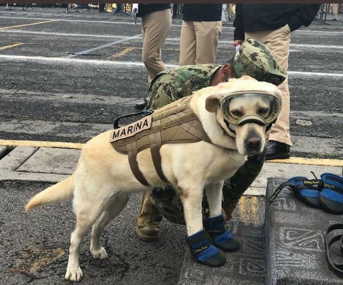 "This Is ""Frida"", She Has Saved 60 People So Far In Her Career"
