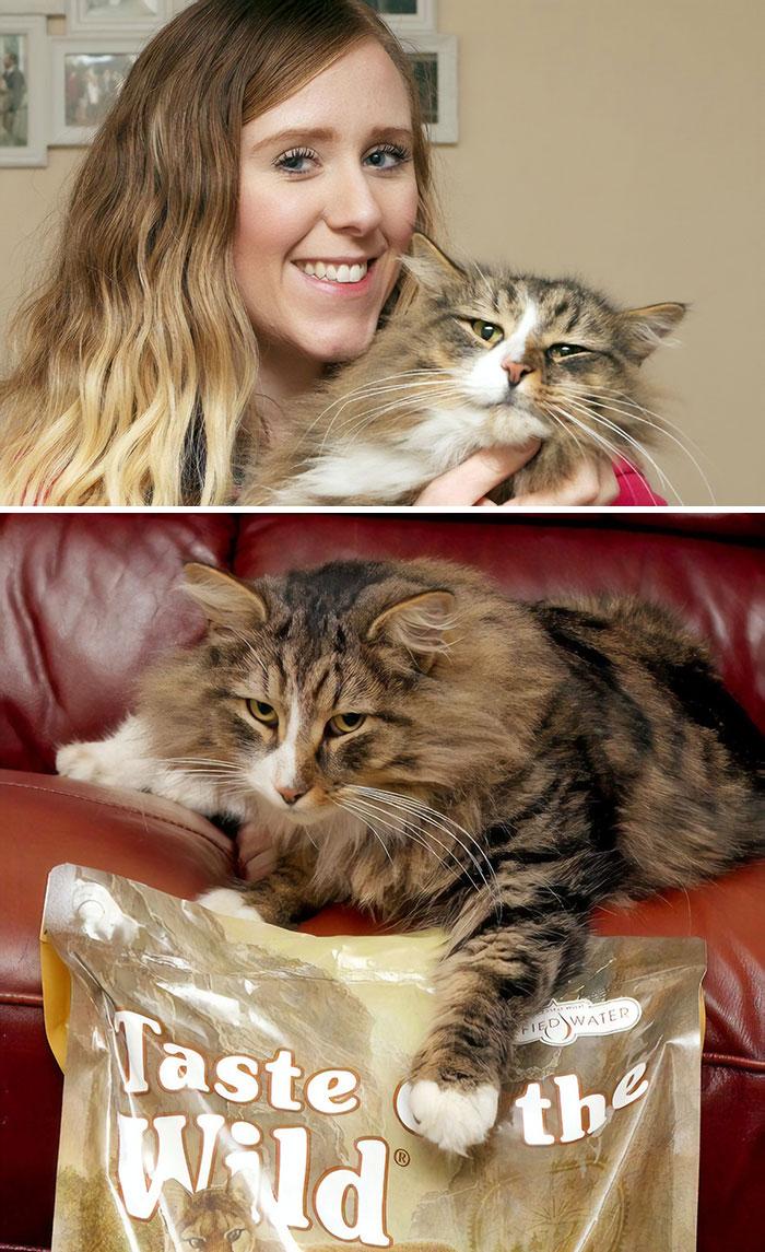 Tras 14 meses, su dueña encontró al gato el doble de gordo: vivía en una fábrica de comida para mascotas