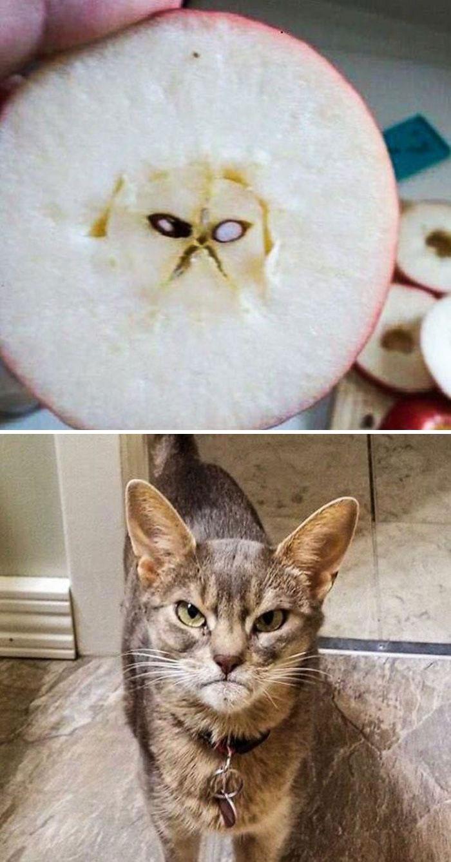 Grumpy Cat In My Apple
