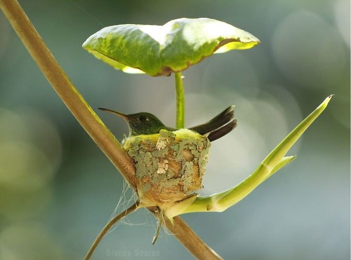 A Beautiful Hummingbird's Nest With A Leaf Roof