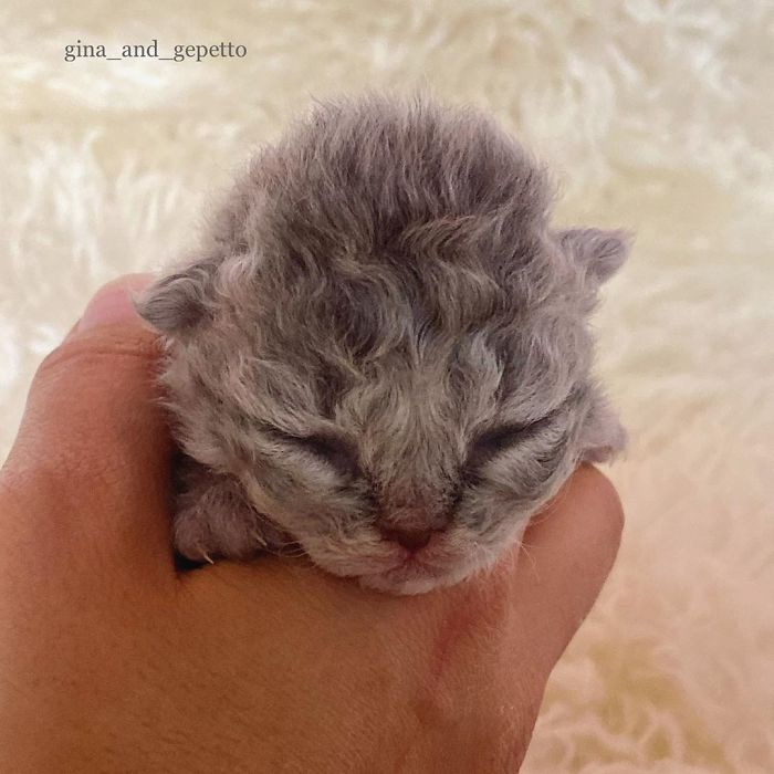 These Kitties Are Very Different From Your Usual Ones (30 Pics)