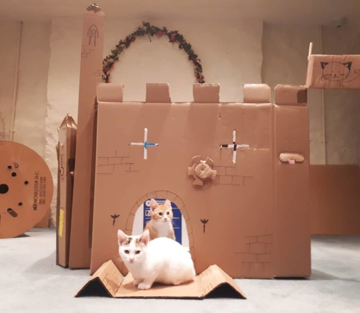 So We Apparently Have To Much Time On Our Hands! We Have Made A Kitten Fort Complete With A Tunnel And Targets. Obviously They Only Played With It For About 20 Minutes And It Will Be Ripped To Shreds By Tomorrow But We Had Fun Making It! #kittens #catsofinstagram #catfort