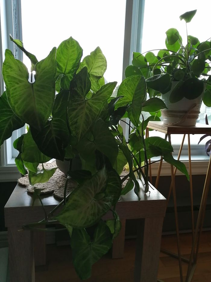 Crazy Plant Lady! Happy To Learn That I'm Not The Only One!