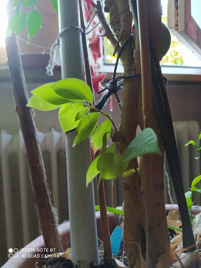This Is My Little One, I Was Growing It From Seeds. I Think It's A Lychee