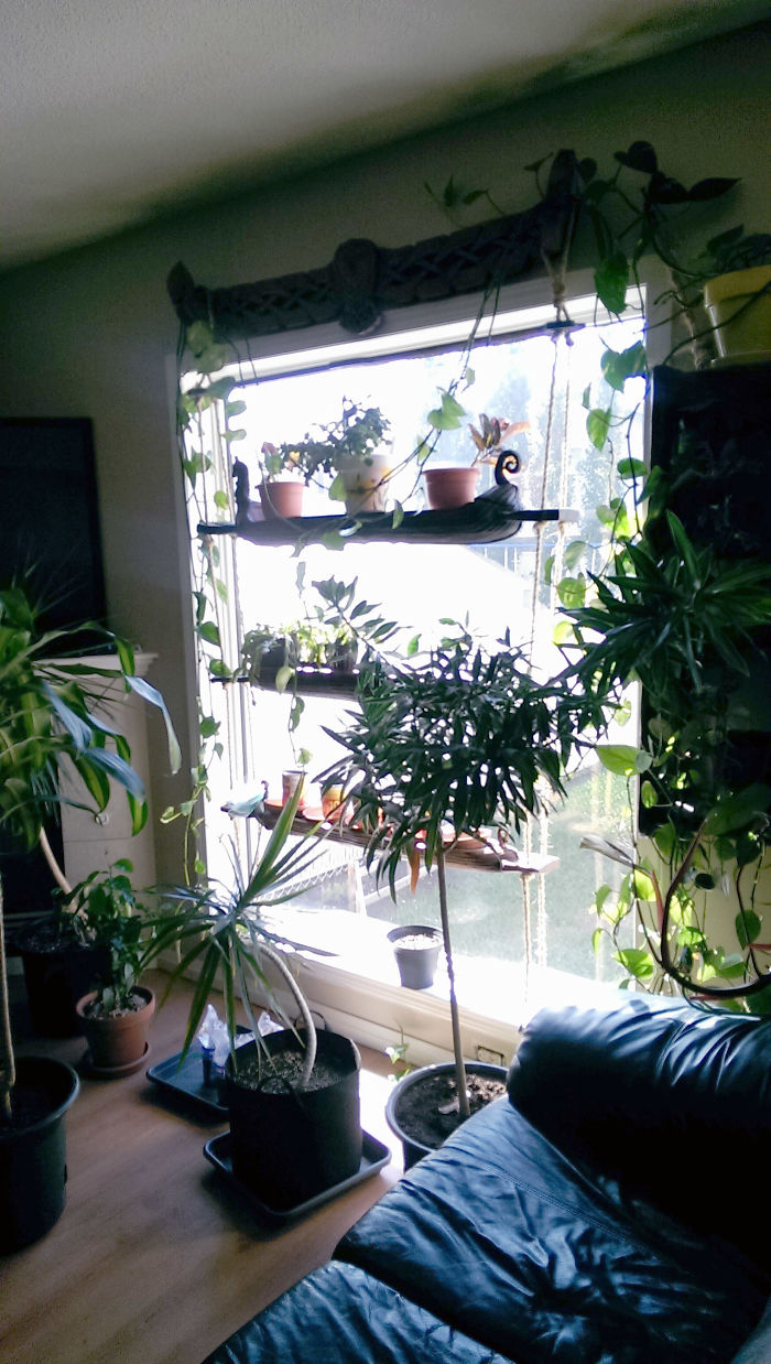 At This Point, Our Living Room Is More Like A Jungle Room... With Viking Ships