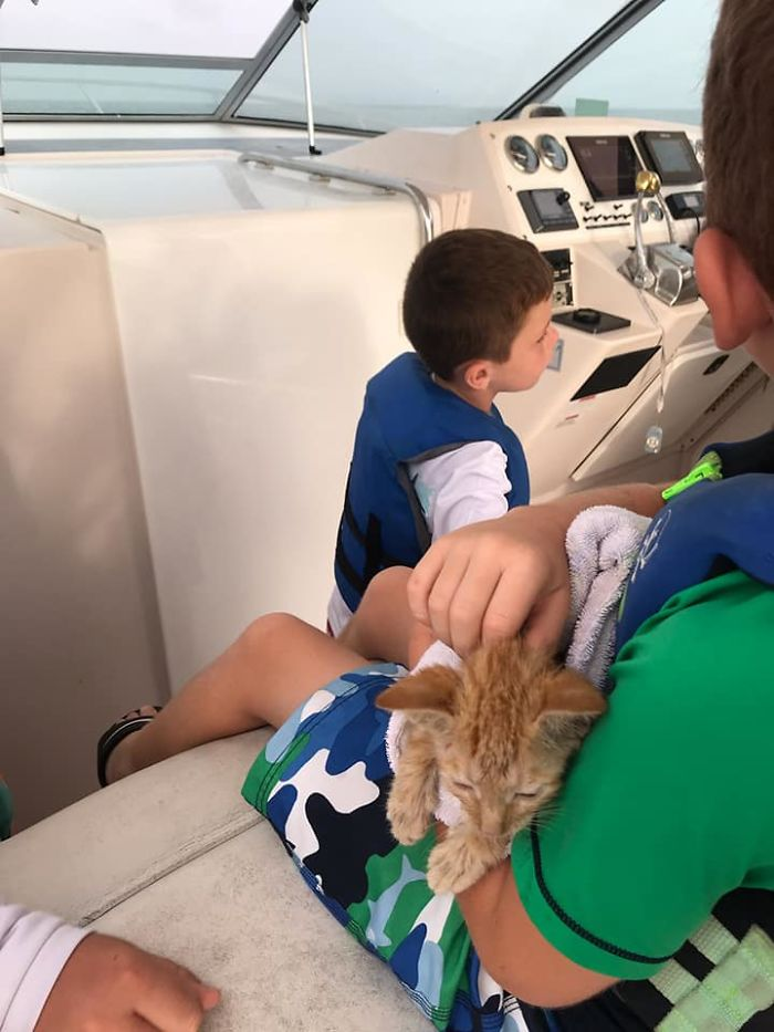 Kitten That Was Struggling To Stay Afloat In The Gulf Of Mexico Gets Spotted By A Fishing Boat That Saves Its Life