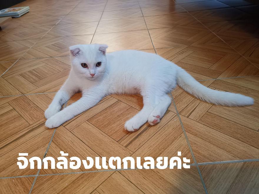 kucing masih berwarna putih
