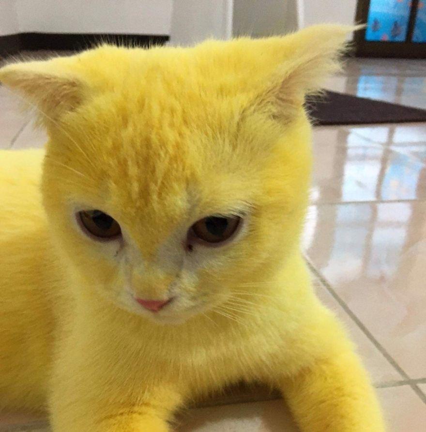 nampak kuning merata diseluruh tubuhnya
