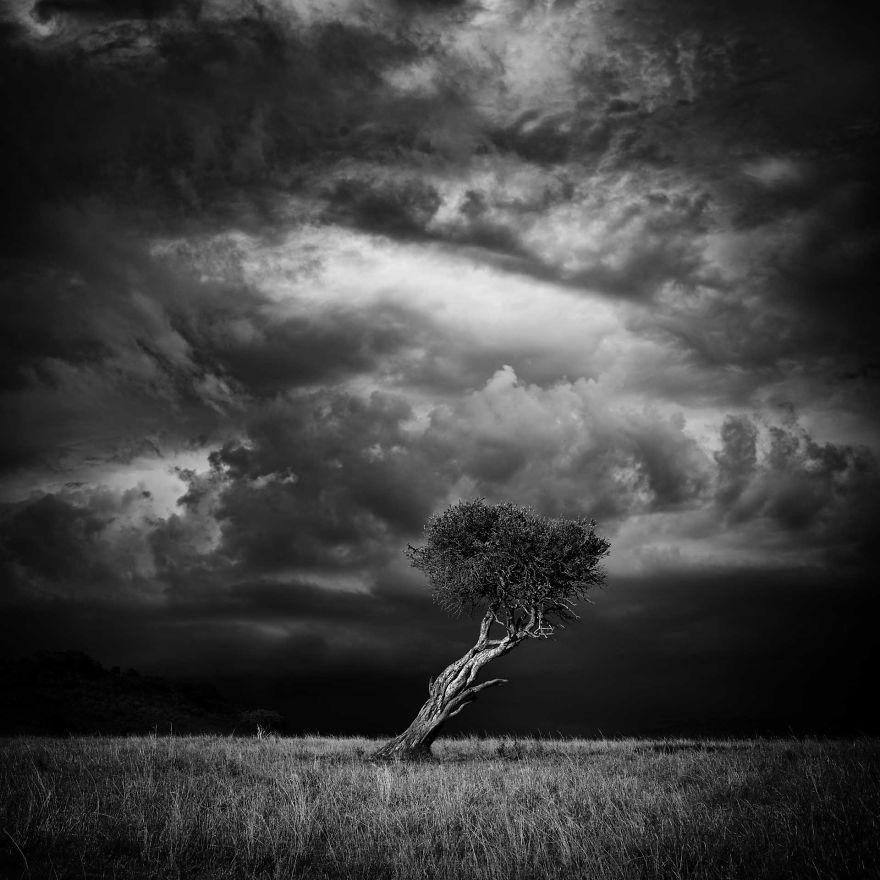 Virginia's Tree, Storm Over Mara, Kenya