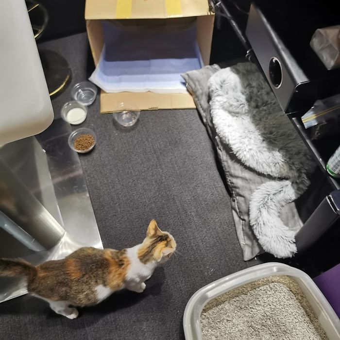 Mi compañera trajo una gata callejera preñada a la oficina, ahora son 9 y tienen su propia sala de juntas
