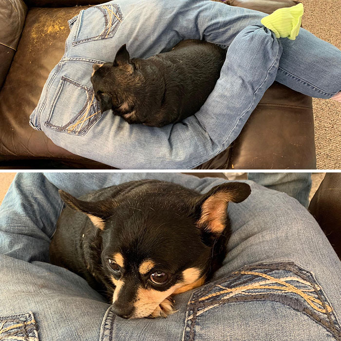 My 10-Year-Old Dog Likes To Sleep On My Legs. I Made Her This Out Of Some Of My Old Jeans For Her To Sleep On While I'm At Work