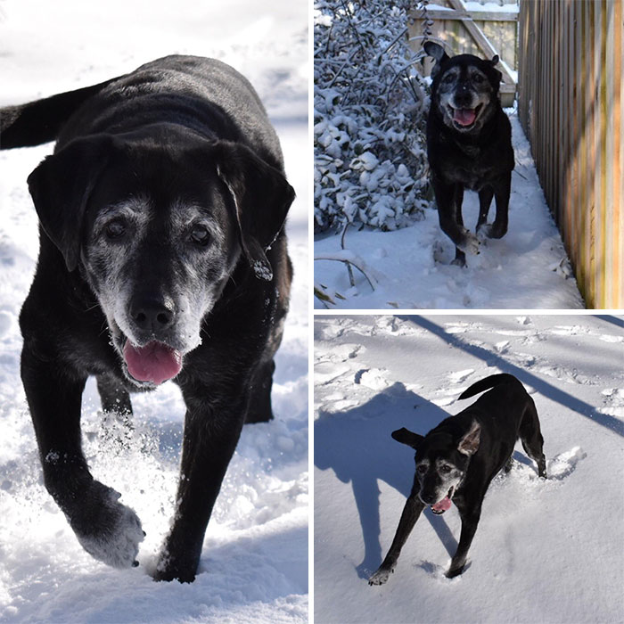 Old Man Aegir Turns 15 Next Month. He Converted Back To Puppy Mode In This Mornings Snow
