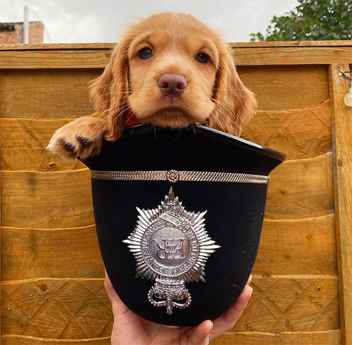 Adorable-Puppies-Police-Training