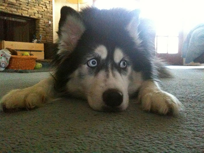 Animals-Condition-Owners-Do-Funny-Things