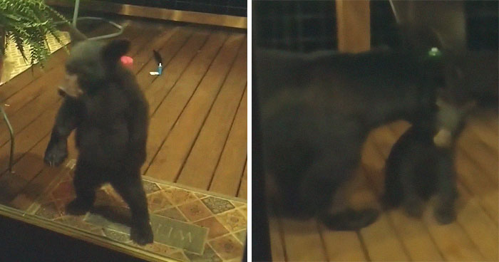 Mama Bear Scolds Her Cub For Peeking Into This Woman's Window And The Video Goes Viral