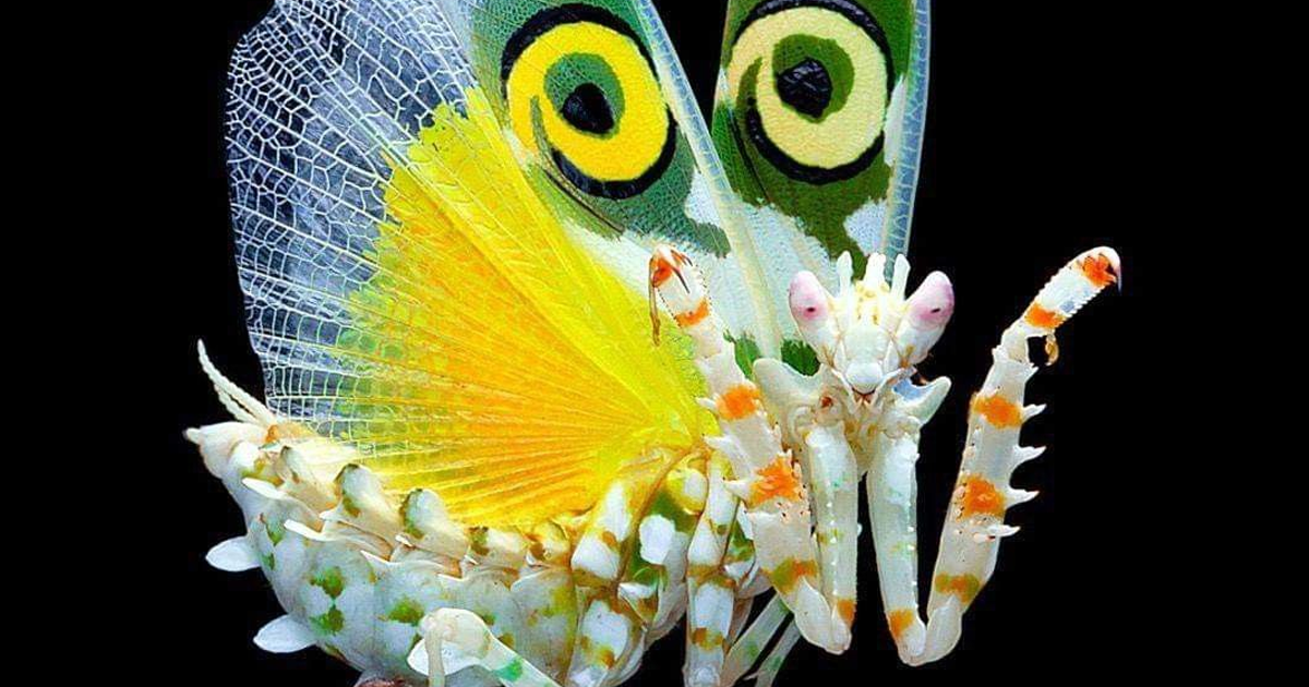 32 Photos Of Mantises That Show Just How Beautiful These Insects Really Are