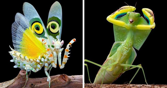 Photographer Captures Amusing Pics Of Stunning Mantises, And Here Are 30 Of The Best Ones
