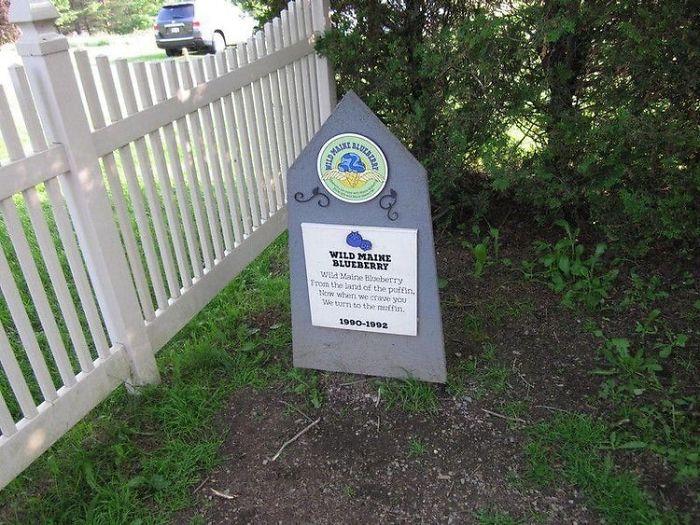 Wild Maine Blueberry (1992 - 1993)