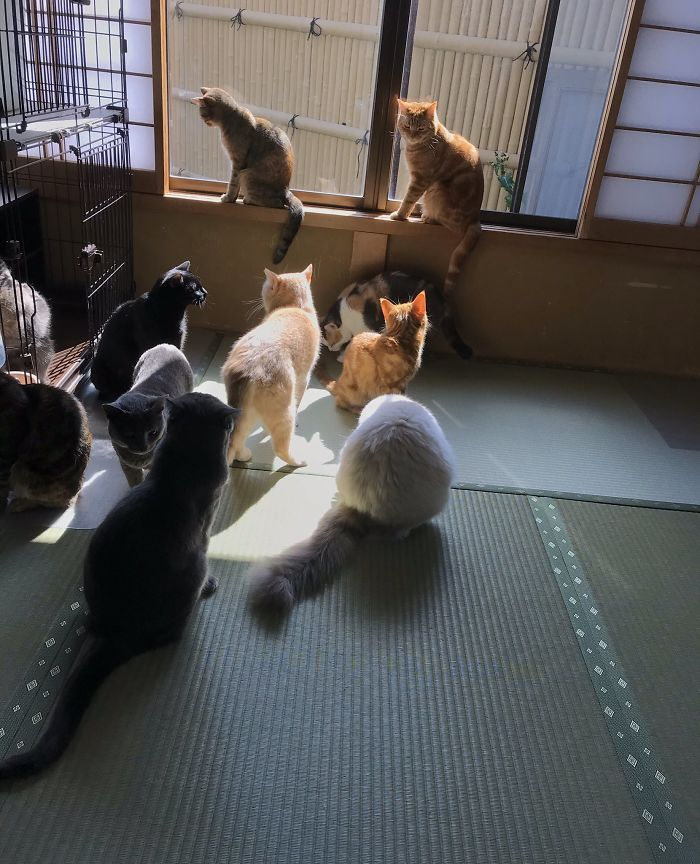 Traditional Japanese Inn Offers Its Guests Cat Companions To Spend The Night With