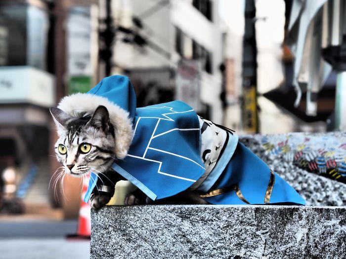Cats-Anime-Costumes-Yagyouneko-Japan