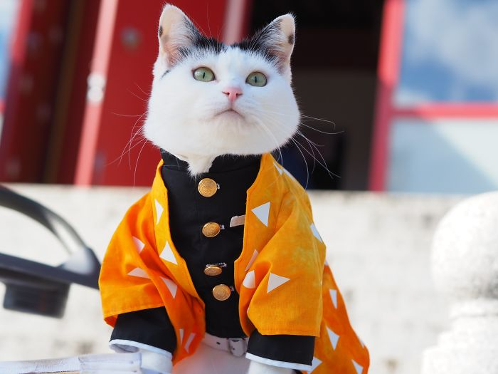 Cats-Anime-Costumes-Yagyouneko-Japan